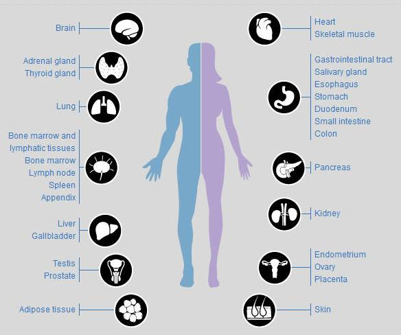 the importance of proteins for the human body Proteins nucleic acids  what are lipids  what are the importance in human body share 8 +1  known as adipose cells that accumulate in certain areas of the .