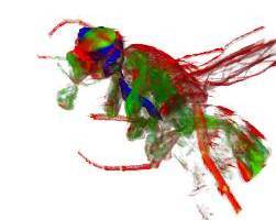 3D image of fruit fly